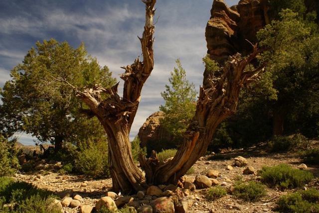 Der Wind und die Trockenheit formen