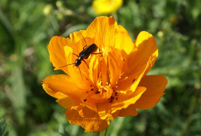 Die Blumenwelt ist klein aber fein